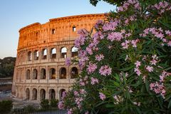 Flowers in front of the Colosseum in Rome Stock Image