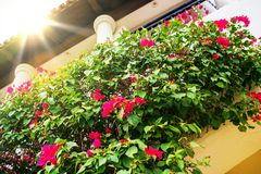 Flowers Decorated Balcony Stock Image