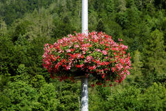 Flowers decorated on the lamp post at Interlaken, switzerland Stock Image