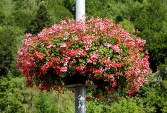Flowers decorated on the lamp post at Interlaken, switzerland Stock Photos