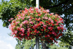 Flowers decorated on the lamp post at Interlaken, switzerland Royalty Free Stock Image