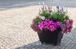 Flowers decorating a city square Royalty Free Stock Photo