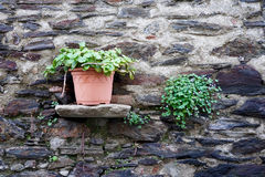 Flowers decorating a wall. Flowers decorating an old brick wall Stock Photography