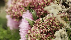 Flowers decorations macro Stock Image