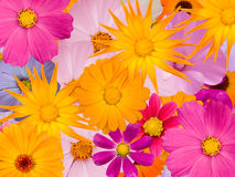 Flowers  decorative Stock Image