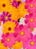 Flowers  decorative Royalty Free Stock Image