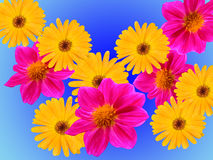 Flowers decorative Royalty Free Stock Photography