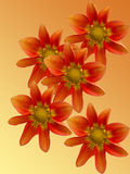Flowers decorative Stock Image
