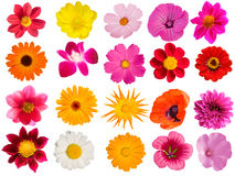 Flowers  decorative  collection Stock Images