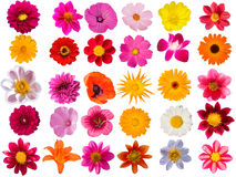 Flowers  decorative  collection Royalty Free Stock Photos