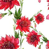 Red flowers - seamless pattern. Flowers  -  decorative composition. Watercolor. Use printed materials, signs, items, websites, map Royalty Free Stock Photos