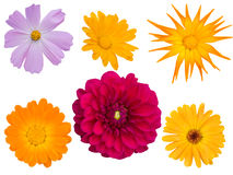 Flowers   decorative  different Stock Photography