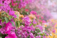 Flowers decorative in the garden Royalty Free Stock Photography