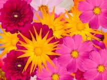 Flowers  dekorative Stock Photos