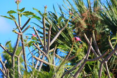 Flowers. Delray beach Florida palm beach Stock Photography