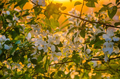 flowers in dense morning fog Royalty Free Stock Photography