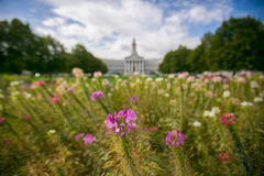 Flowers at the Denver State Capitol. A pink stalk flower is in focus with the Denver State Capitol building and grounds blurred in the background Stock Photography