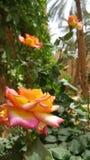 Flowers in Desert garden royalty free stock image