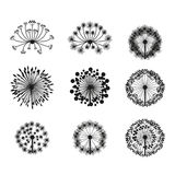Flowers design Royalty Free Stock Photography