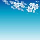 Flowers design. Branch of sakura with flowers. Cherry blossom on blue Bokeh Background. Vector EPS 10, cmyk.  stock illustration
