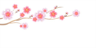 Flowers design. Branch of Sakura isolated on white background. Apple-tree flowers. Cherry blossom. Vector EPS 10 cmyk.  Vector Illustration