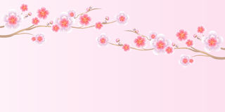 Flowers design. Branch of Sakura  on light pink background. Apple-tree flowers. Cherry blossom. Vector EPS 10 cmyk Royalty Free Stock Photos