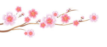 Flowers design. Branch of Sakura  on white background. Apple-tree flowers. Cherry blossom. Vector EPS 10 cmyk Stock Photo