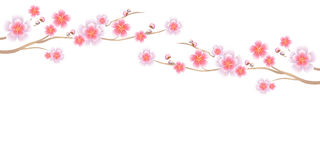 Flowers design. Branches of Sakura isolated on white background. Apple-tree flowers. Cherry blossom. Vector EPS 10 cmyk.  Royalty Free Illustration