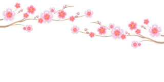 Flowers design. Branches of Sakura  on white background. Apple-tree flowers. Cherry blossom. Vector EPS 10 cmyk Stock Image