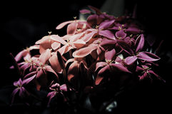 Flowers in the design of natural dark tones. Stock Photo
