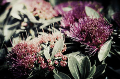 Flowers in the design of natural dark tones. Royalty Free Stock Image