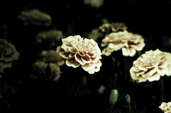 Flowers in the design of natural dark tones. Royalty Free Stock Photo