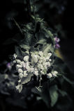 Flowers in the design of natural dark tones. Royalty Free Stock Images