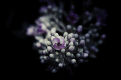 Flowers in the design of natural dark tones. Royalty Free Stock Photography