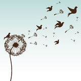 Flowers design Royalty Free Stock Image