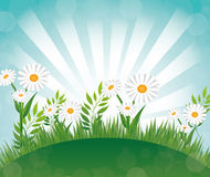 Flowers design. Stock Images