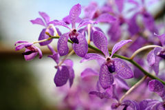 Flowers. Details with beautiful violet orchid Stock Images