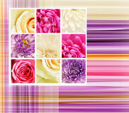 Flowers details on striped background Royalty Free Stock Photo