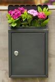 Flowers Dianthus Barbatus In Mailbox On Door Outdoor. Royalty Free Stock Images