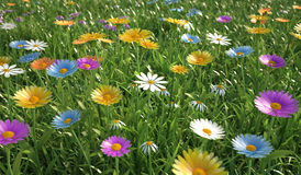 Flowers of different colors, in a grass field. Royalty Free Stock Image