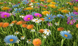 Flowers of different colors, in a grass field. Royalty Free Stock Photography