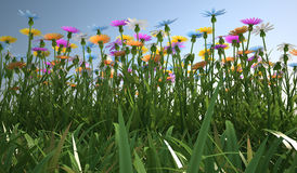 Flowers of different colors, in a grass field. Close up view of a grass filed, plenty of multicolored flowers, viewed from a side with close grass Stock Photos