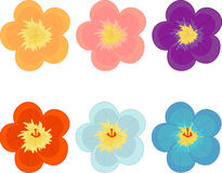 Flowers of different colours Royalty Free Stock Photo