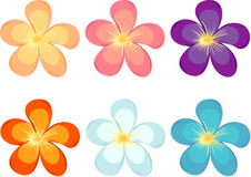 Flowers of different colours Royalty Free Stock Images