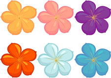Flowers of different colours Stock Photography