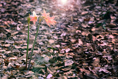 Flowers in Dim light Royalty Free Stock Photo