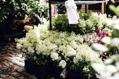 Buckets of market flowers in Copenhagen stock image