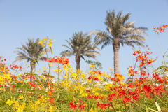 Flowers in Doha, Qatar Royalty Free Stock Photography