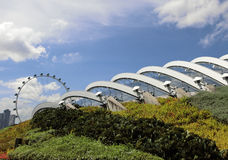 Flowers Dome with Singapore Flyer. Singapore - August 2016 - A view of roof of the Flowers Dome at the Gardens by the Bay with the Singapore Flyer in the Stock Images