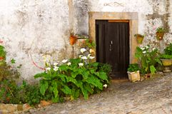 Flowers at doorway. A view of large green flowers growing around the doorway of a building in a traditional village in Portugal royalty free stock photos